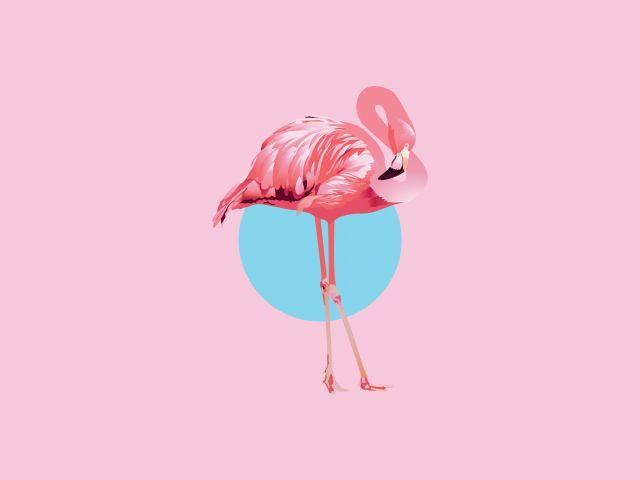 Poster Flamingo   flamingo rosa