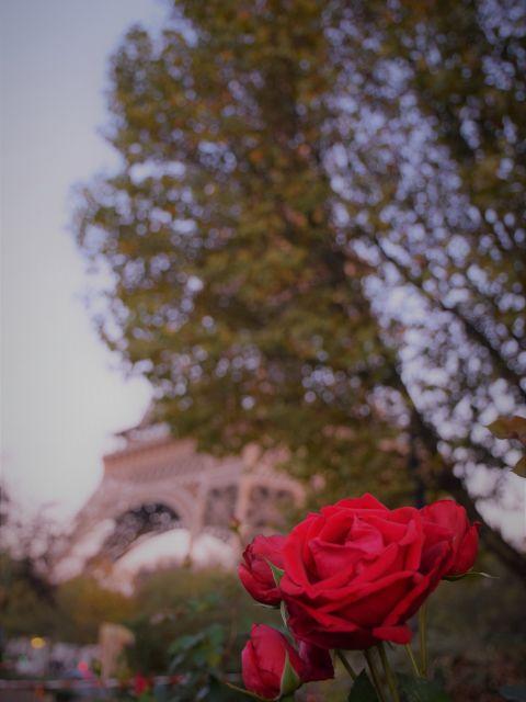 Poster Paris - Flores e torre   França Rosas