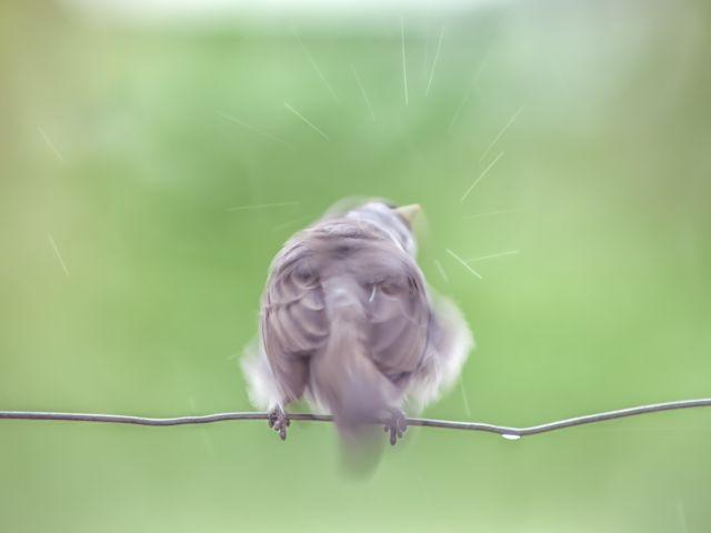 Poster Pássaro na Chuva