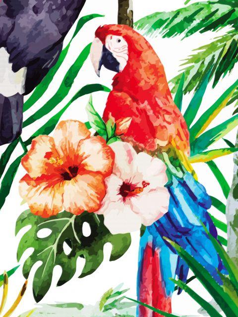 Poster Papagaio Papagaio