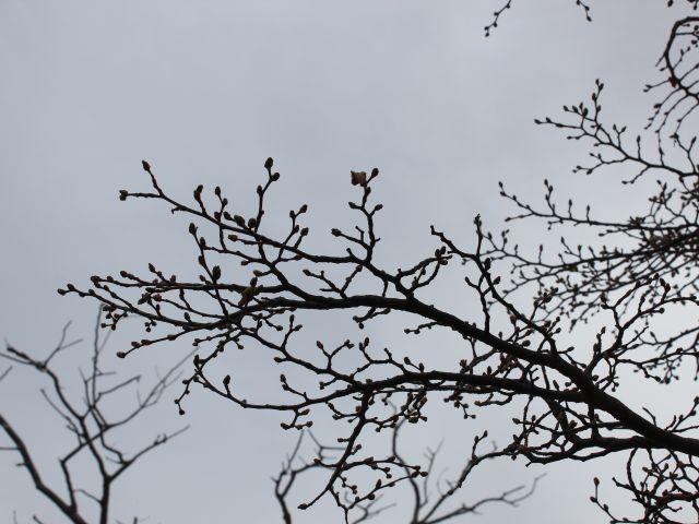 Poster Galhos   árvore