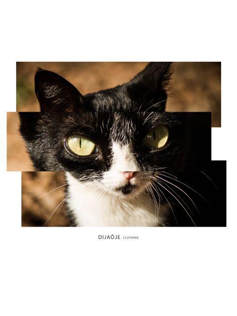 Poster The Cat   gato