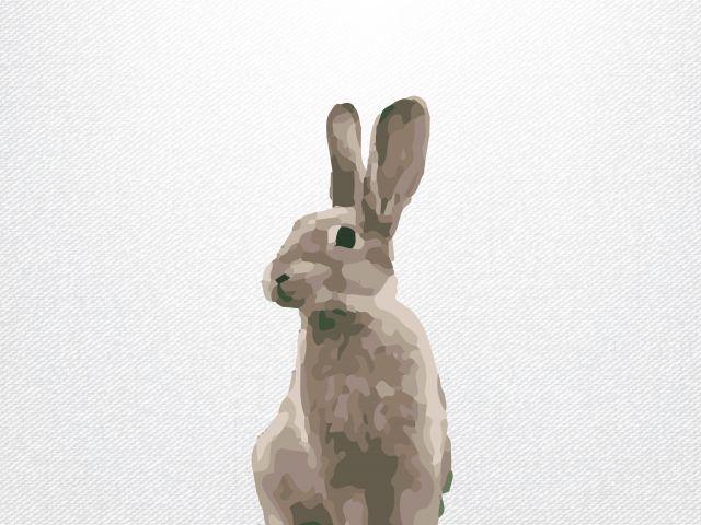 Poster Rabbit   coelho