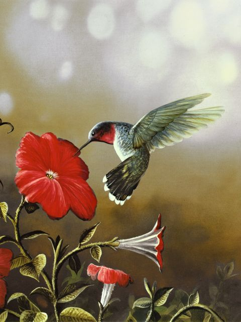 Poster Ruby Throated Hummingbird