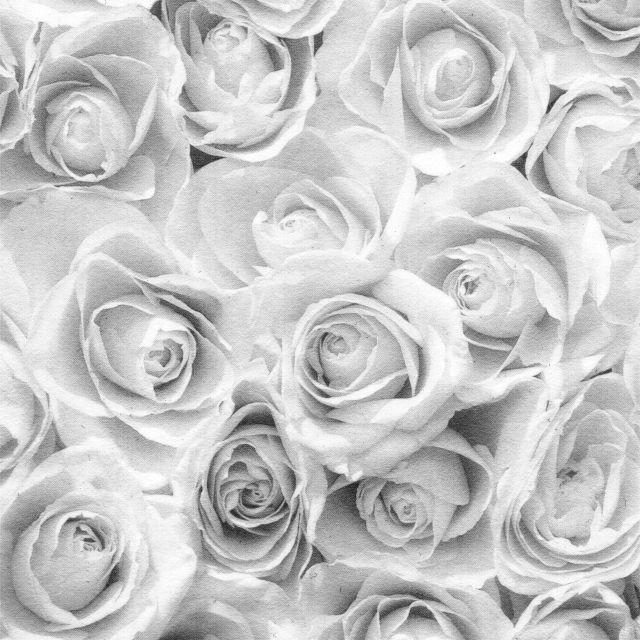 Poster Rosas