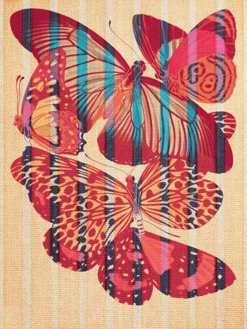 Poster Butterflies in Strips