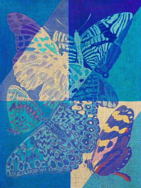 Poster bLuEtterflies   borboleta borboletas