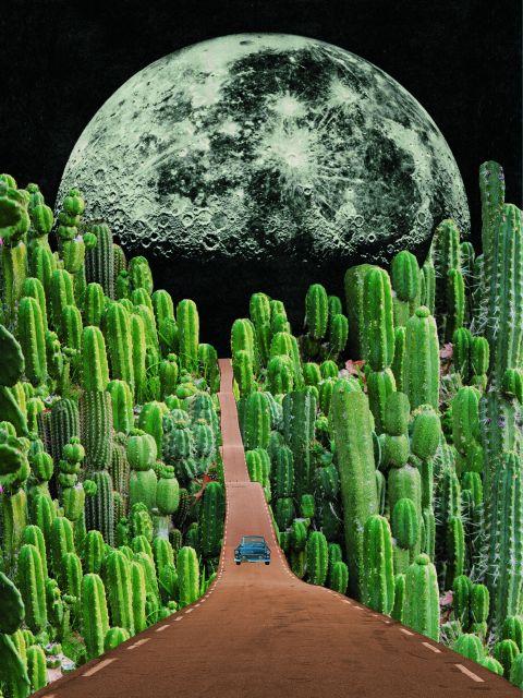 Poster Estrada e cactus