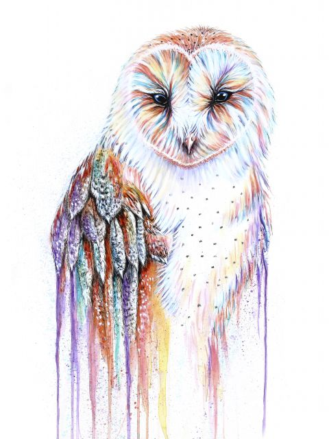 Poster Barred Rainbow Owl