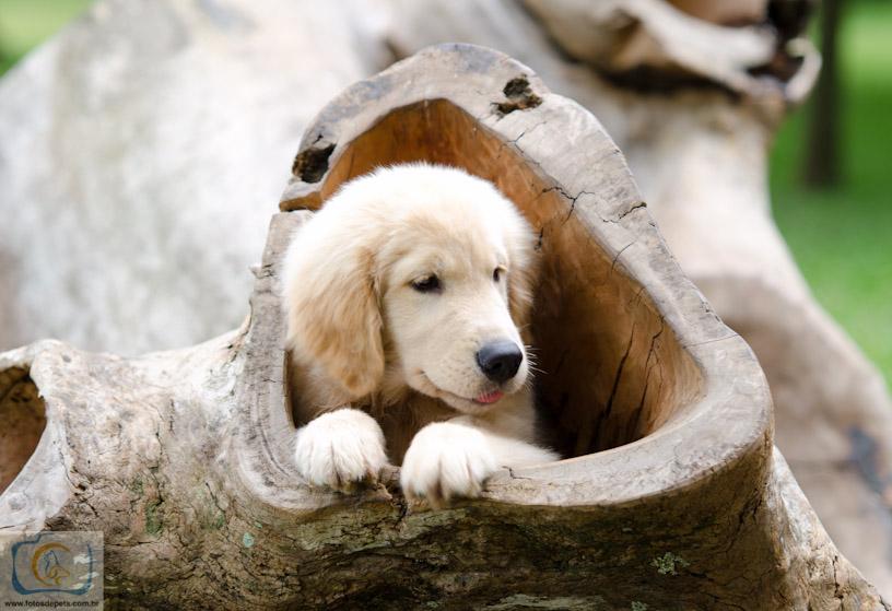 Ensaio Básico de Cães