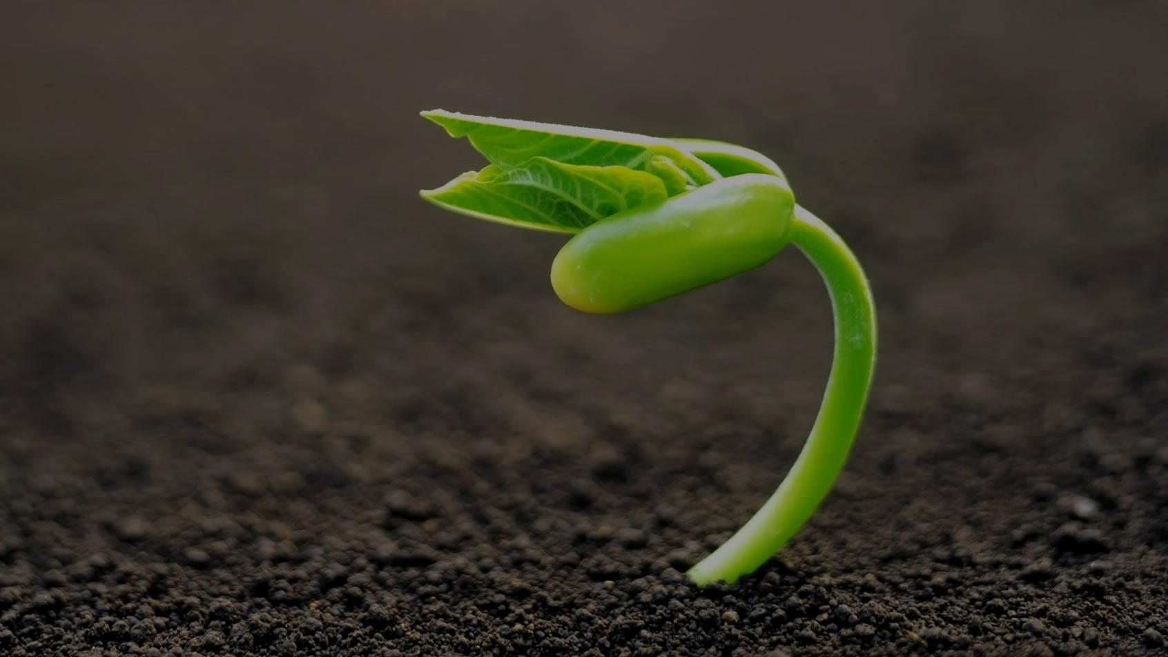 Curso Básico: Começando na Identificação de Plantas