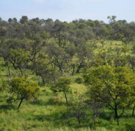 Bases Ecológicas e Fitogeográficas na Classificação da Vegetação de Mata Atlântica e do Cerrado