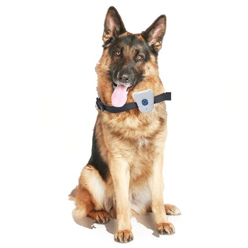 Collar Dog - Seu cãozinho mais sociável e educado.