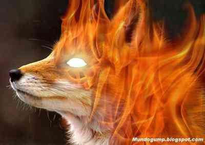 Firefox - O sabor da raposa flambada
