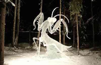 Louva-Deus de gelo