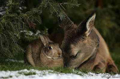 Bambi - A vida imita a arte?
