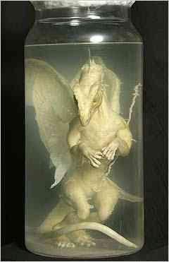 Um feto de dragão em conserva no vidro?
