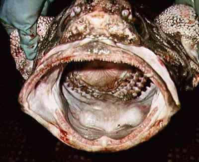 Peixes bizarros de altas profundidades