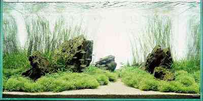 Paisagismo de aquário - Banzai