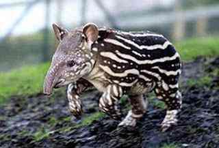 Os animais mais estranhos e esquisitos do mundo