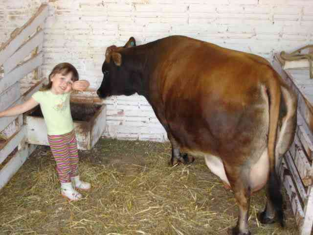 A solução para o leite contaminado/adulterado