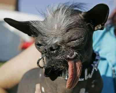 Cães do capeta