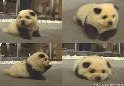 Dez dos bichinhos mais fofinhos do mundo