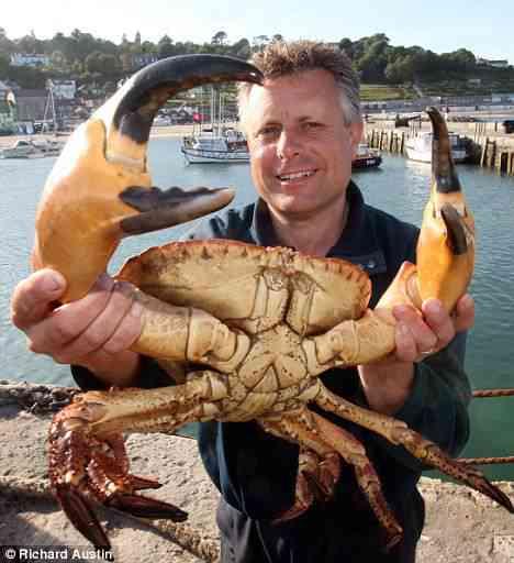 """Caranguejo """"Monstro"""" encontrado no mar"""