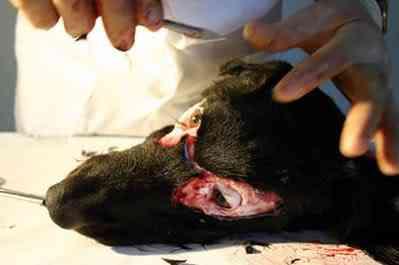Artista costura pedaços de cachorro assassinado no próprio corpo
