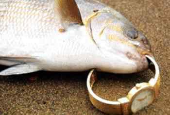 A melhor história de pescador?