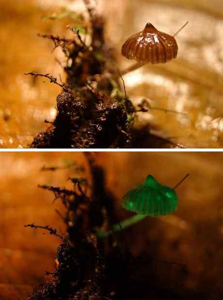 Os mais incríveis fungos e líquens da natureza