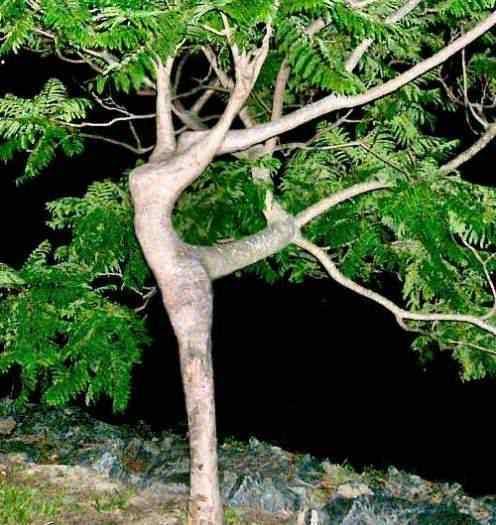 Natureza erótica