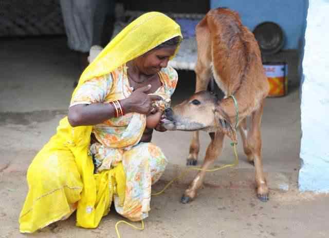 Pessoas amamentando animais