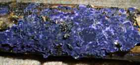 Chalet fungusblue 50 seres inacreditavelmente azuis