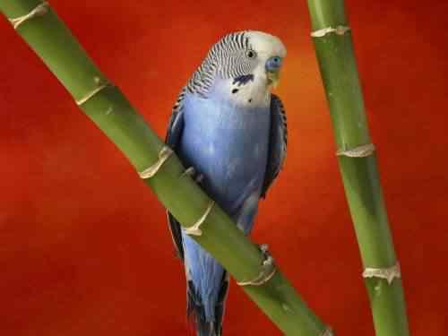 blue bird 1 50 seres inacreditavelmente azuis