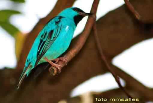 blue birdhjh 50 seres inacreditavelmente azuis