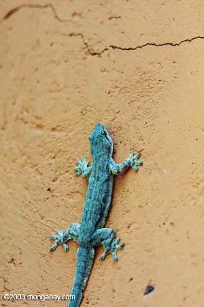 thailand 0056 50 seres inacreditavelmente azuis