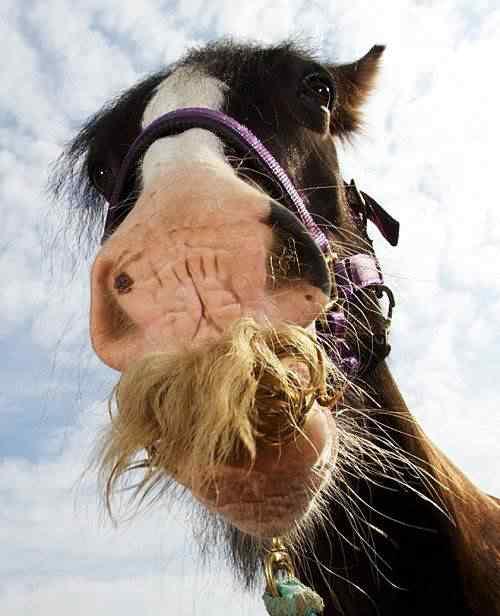 Alfie, o cavalo que tem bigode
