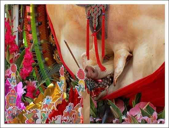 Festival do porco sagrado em Taiwan