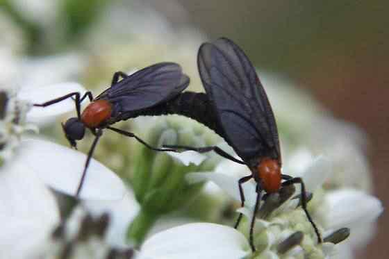 O inseto que só para o sexo quando morre