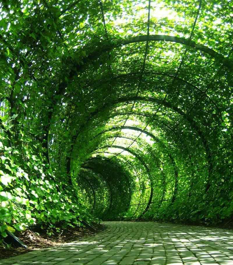 O jardim mortal