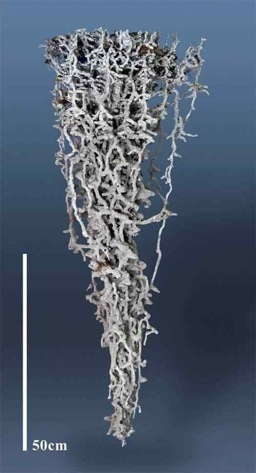 Formigueiros de alumínio