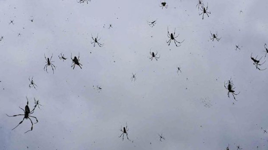 O dia que choveu aranha no Brasil