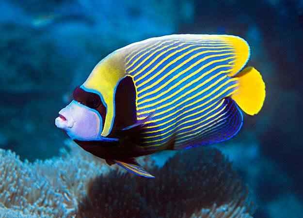 10 aquarium fish for every budget pictures1 Top seres coloridos