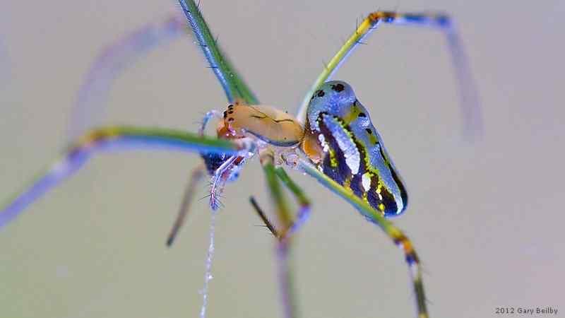 20120519110207 queensland.spider.1 Top seres coloridos