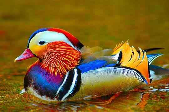 Top seres coloridos
