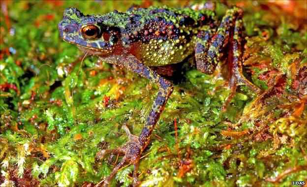 54066604 rainbow toad Top seres coloridos