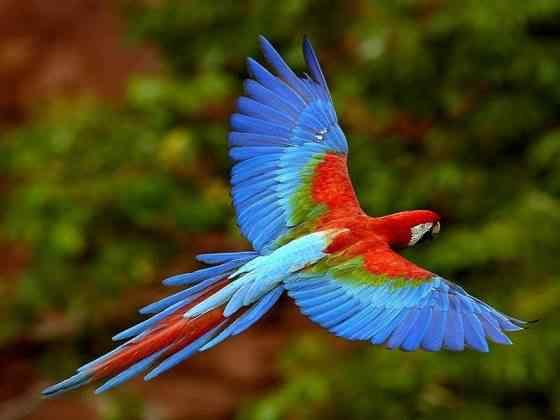 Fotos de Araras 3 Top seres coloridos