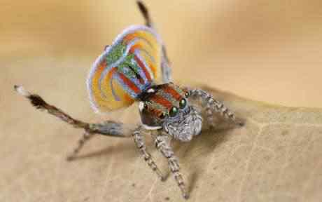 SPIDER 460 1532867c Top seres coloridos