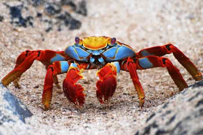 amazing animal photos 96 Top seres coloridos